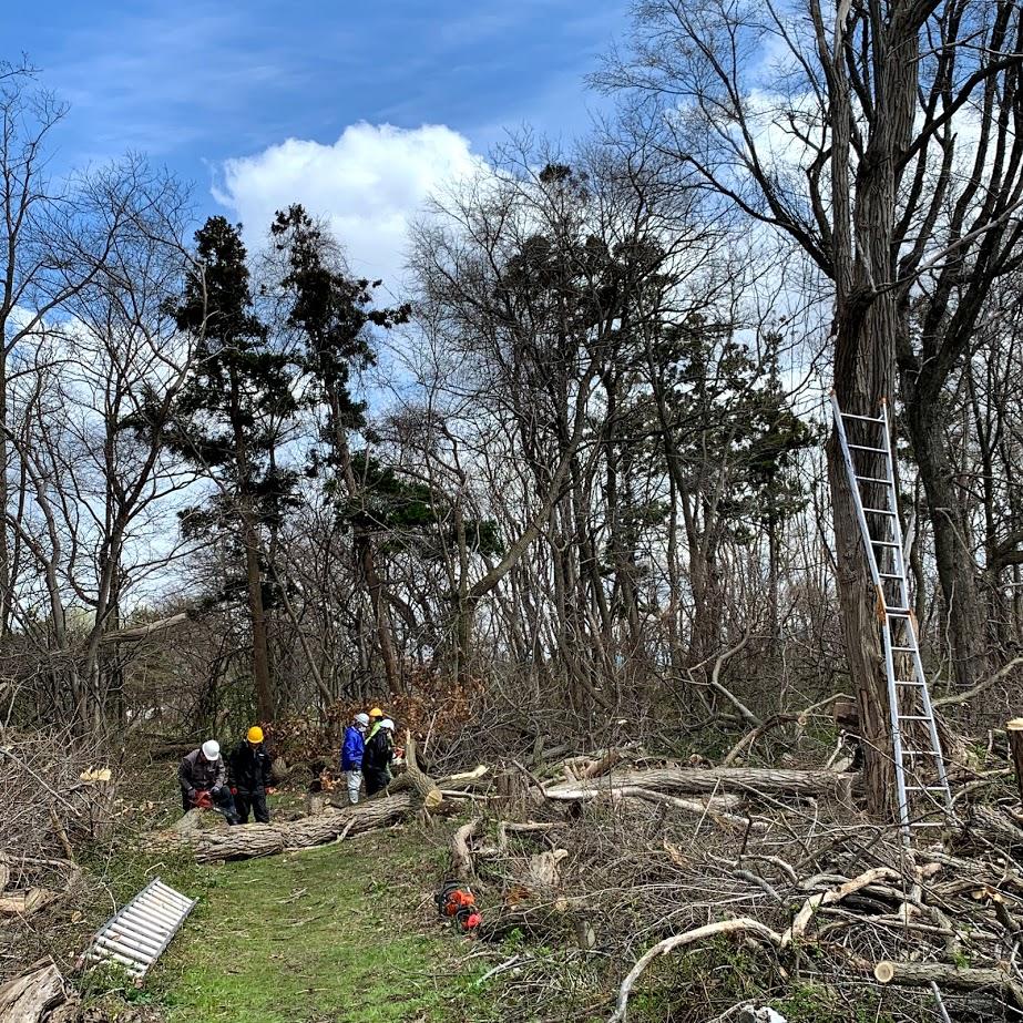 庭木伐採のイメージ画像