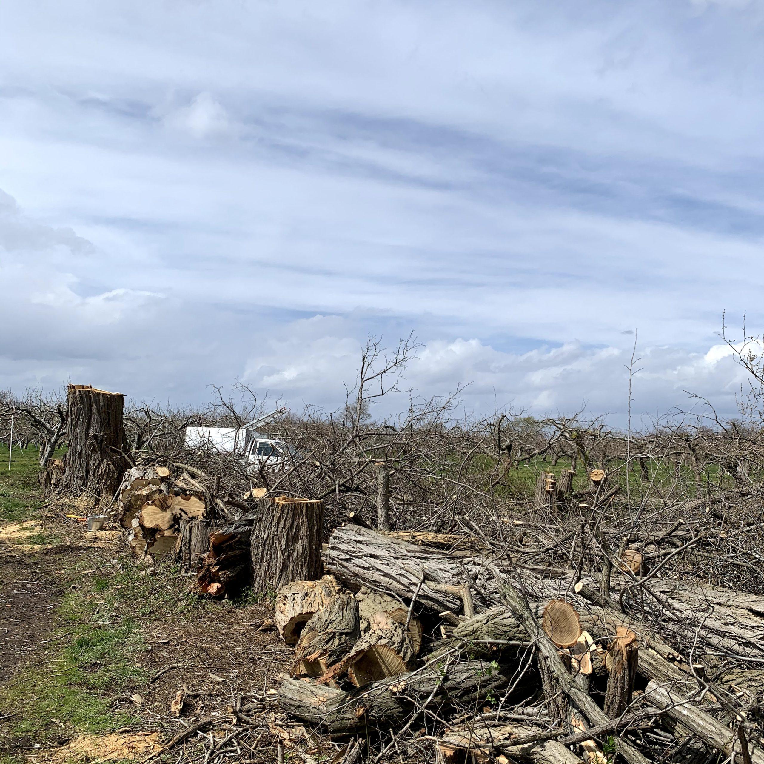 雑木林伐採作業