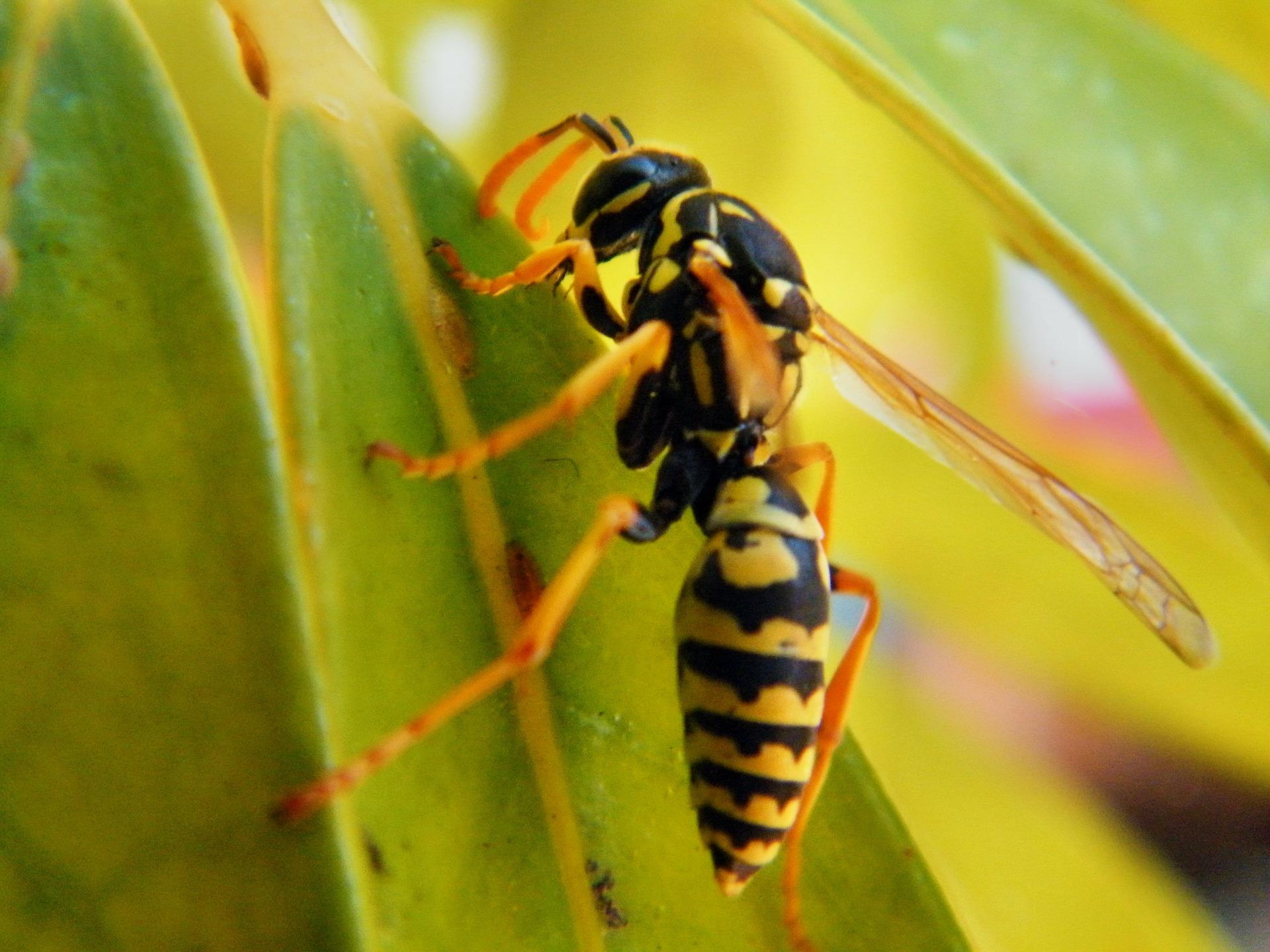 蜂の巣駆除のイメージ
